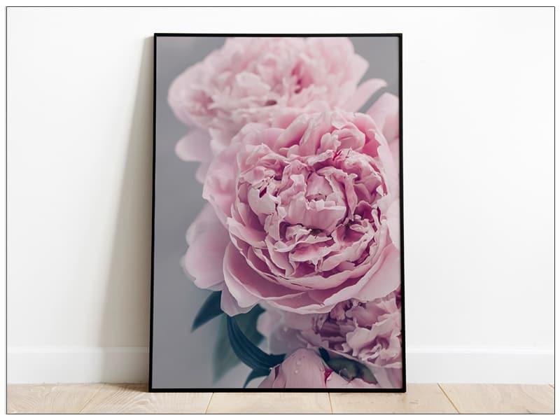 Tablou Art Print cu flori bujori