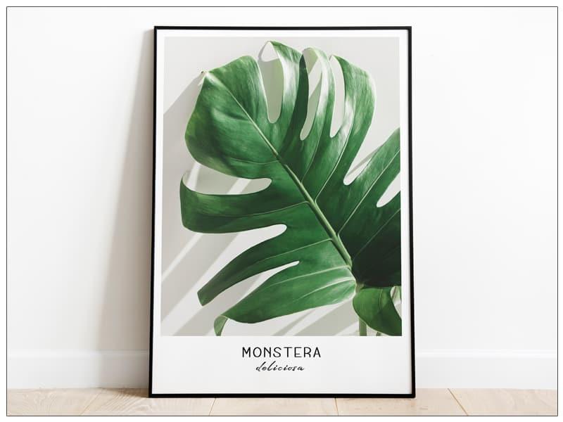 Tablou Fine Art Monstera frunze de palmier