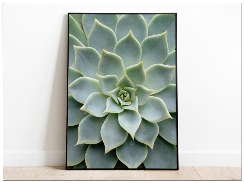 Tablou Fine Art frunze cactus
