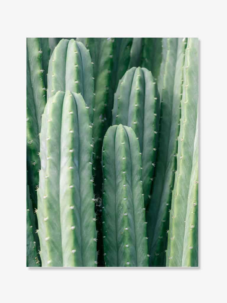 Tablou Fine Art Poster Cactus