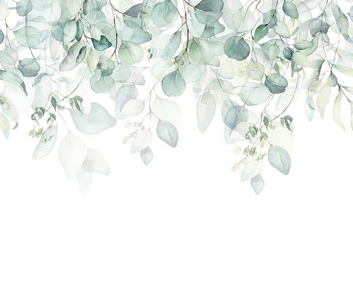 Foto Tapet frunze eucalipt