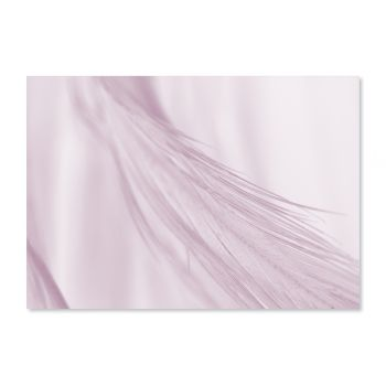 Tablou Art Print fotografii Soft Feather