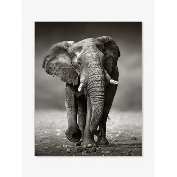 Tablou art print elefant