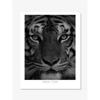 Tablou Fine art  print Tigru bengalez