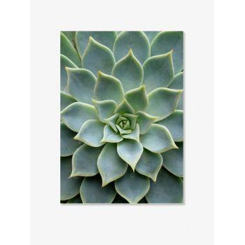 Tablou Fine Cactus